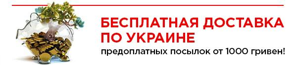 Условия бесплатной доставки предоплатных посылок по Беларуси